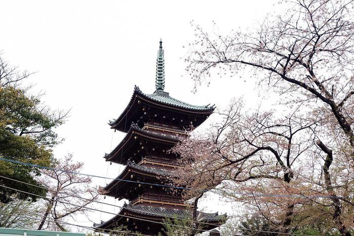 Tokyo, Japan🌸 Taking Photos Photography Wanderlust ASIA Tokyo,Japan Tokyo Travel Travel Photography Fujifilm_xseries Cabincrew Layovers Japan Temple Cherry Blossoms Springtime