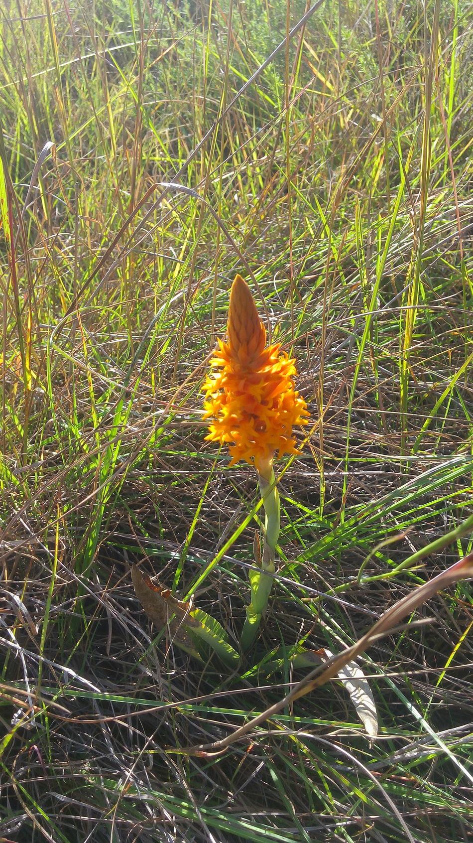 Flora Del Estado De Guerrero