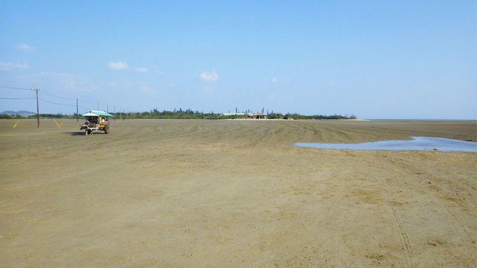 西表島 ( Iriomotejima Iriomote Island Iriomote )と 由布島 ( Yubujima )を結ぶ 水牛車 です。海が完全に干いたバージョンです。