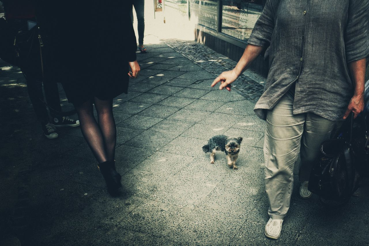 Little between. Dog Low Section Domestic Animals Human Body Part Human Hand People Streetlife Pets Human Leg Streetsofberlin The Street Photographer - 2017 EyeEm Awards