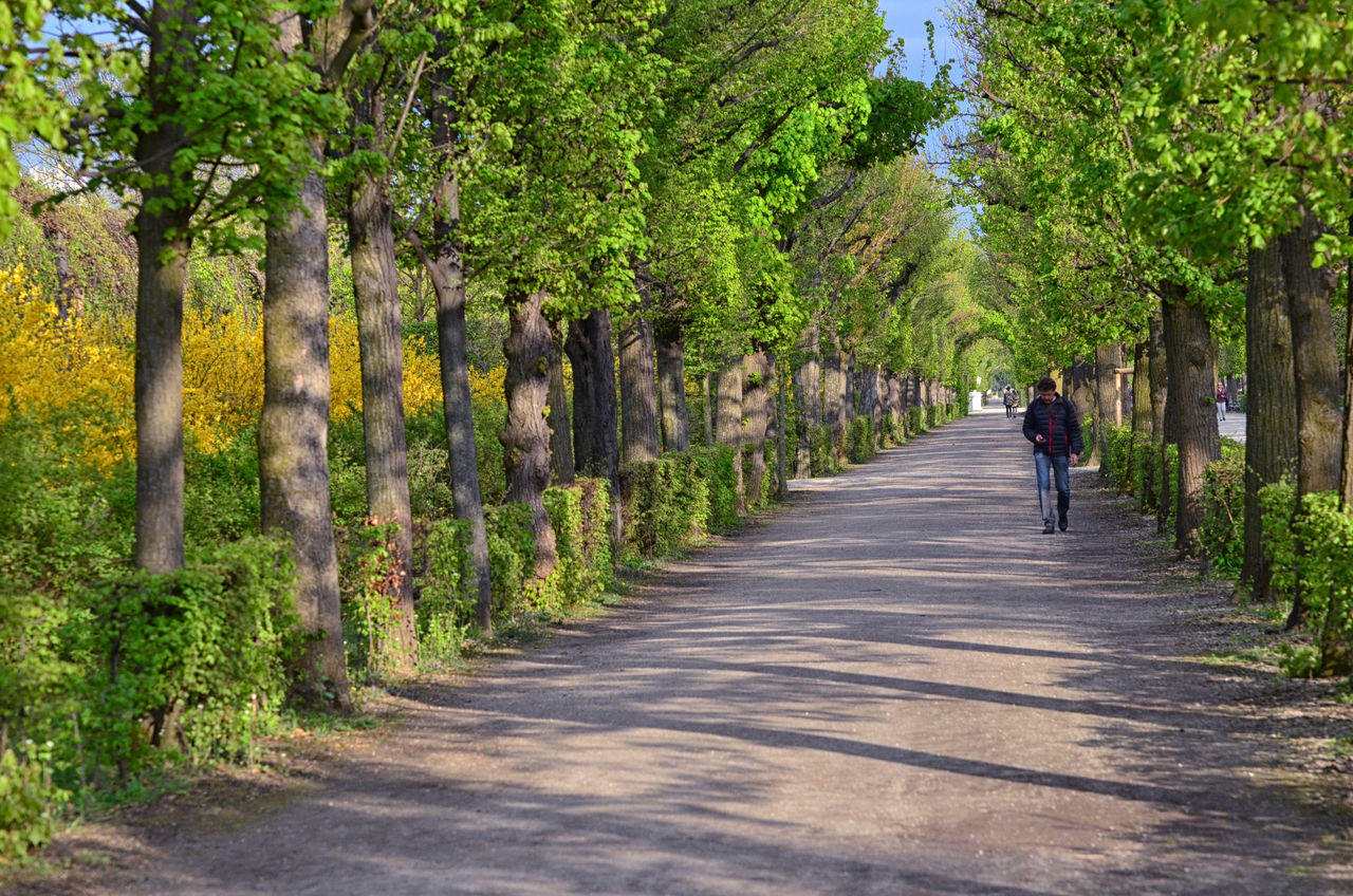 tree, full length, one person, walking, the way forward, day, real people, nature, outdoors, men, growth, lifestyles, beauty in nature, scenics, people, adult, adults only, one man only, only men