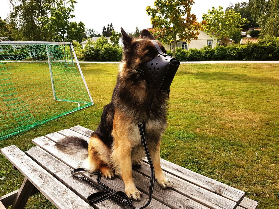 Hanging Out Taking Photos Check This Out Hello World Relaxing Hi! My Lovely Dog German Shepherd Summertime Guard Dog Security Dog