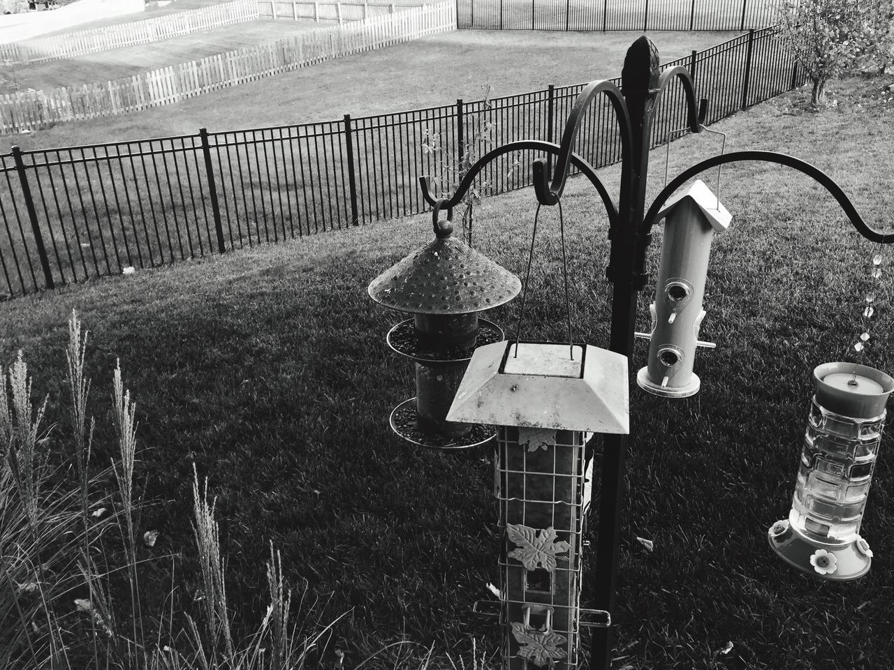 Monochrome suburbia 20: ...for the birds Outdoors Metal Grass Day No People Nature Monochrome Photography Birdless Feeders Fence Grass Back Yard