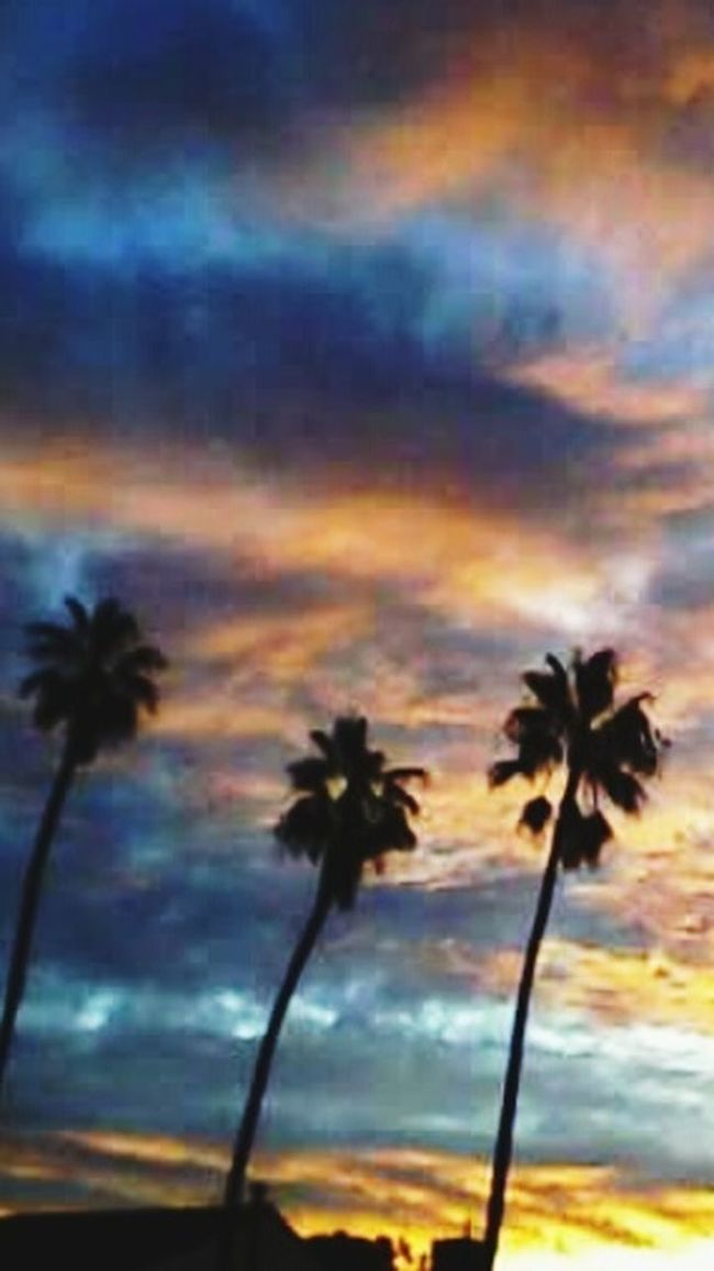 Palm Trees At Sunrise Sunrise Silhouette Sunrise And Clouds Painted Sky Colors Of Nature Colors Of Sunrise Clouds And Sky Clouds And Sky Colors