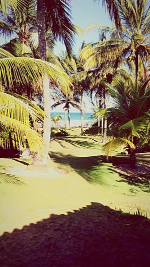 EyeEmNewHere Maraú Paradise Bahiacoisalinda Bahia/brazil