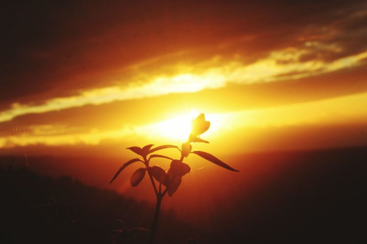 Sunset Sun Nature Beauty In Nature Sky Scenics No People Outdoors Sunlight Cloud - Sky Summer Yellow Close-up Plant Red Landscape Flower Beauty Sea Freshness