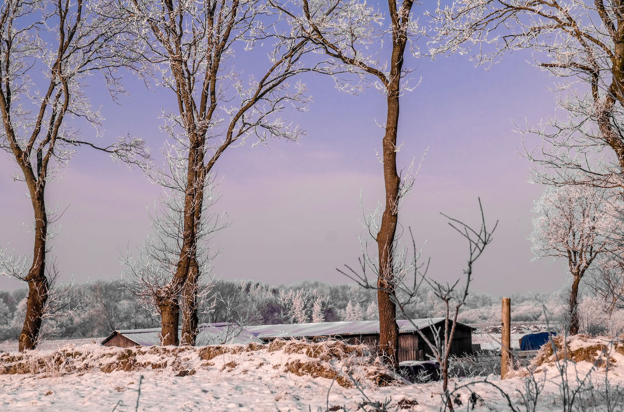 Cold Cold Temperature Frost Ice Landcape Leftbehind Nature Outdoors Sky Snow Stable Tree White