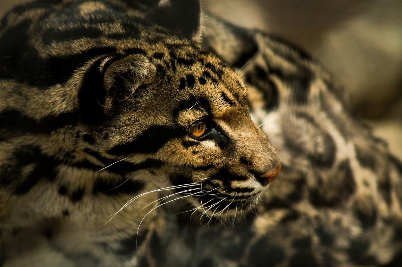 Beautiful stock photos of jungle, Animal Themes, Auto Post Production Filter, Close Up, Day