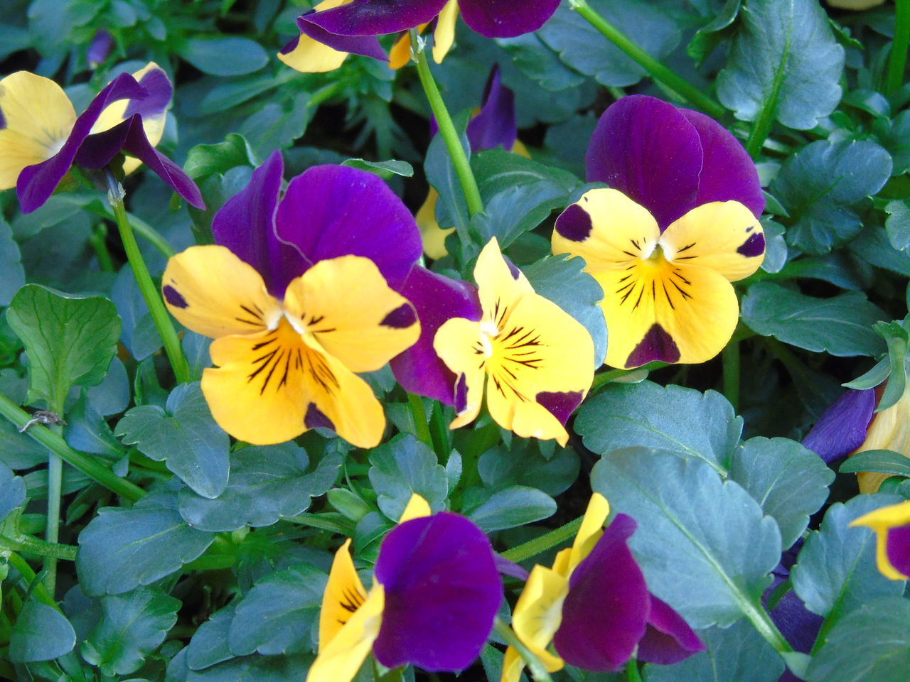 Violets don't necessarily have to be violet :) Beauty In Nature Blooming Close-up Day Feel Feelings Flower Flower Head Fragility Freshness Green Color Growth Hope Leaf Nature No People Outdoors Petal Plant Spngbb Spngtime Spring