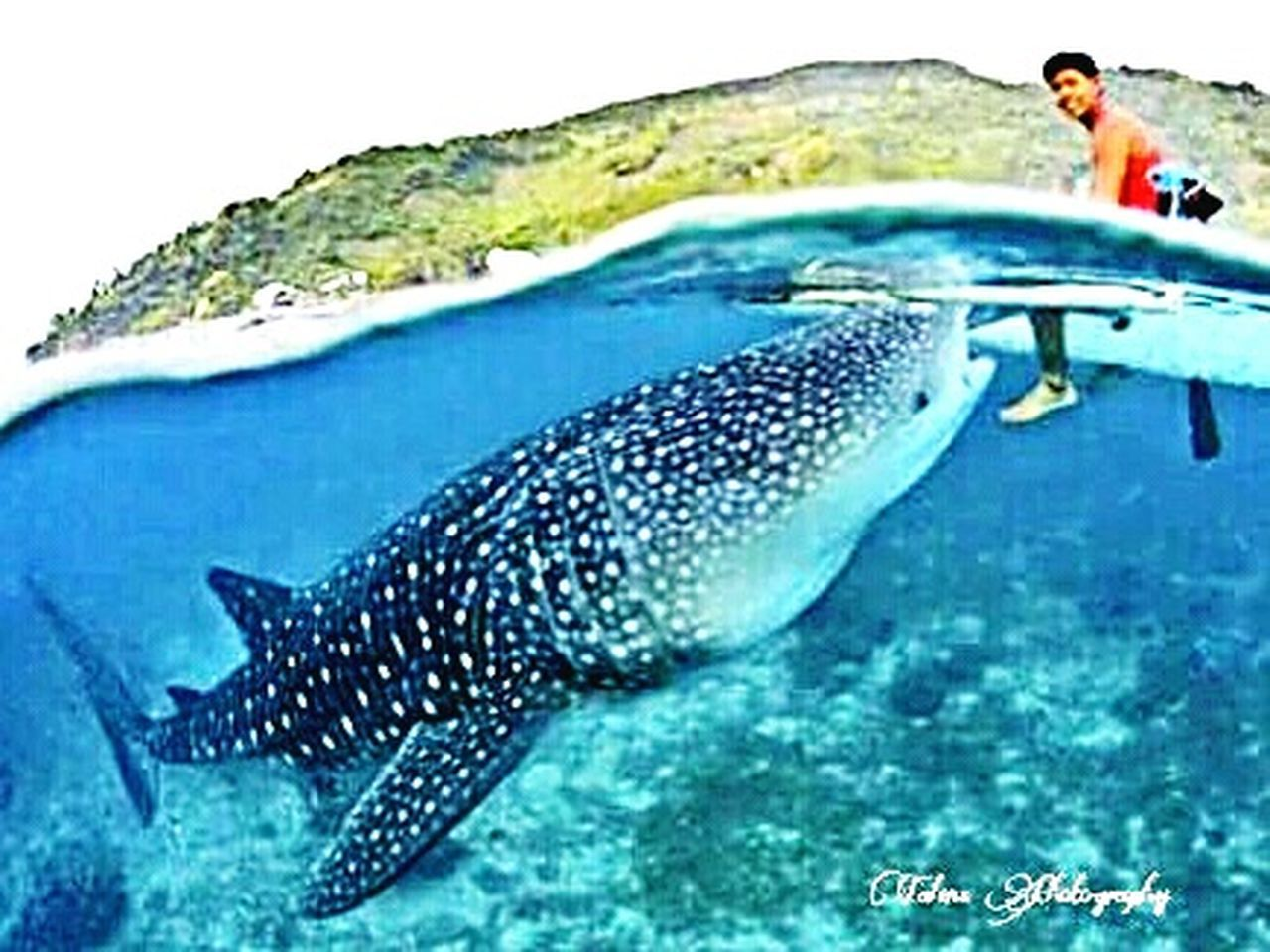 mid adult, sea, one person, fish, adults only, people, one man only, only men, adult, adventure, mid adult men, sea life, vacations, water, full length, nautical vessel, swimming, men, underwater, nature, whale shark, day, undersea, scuba diving, outdoors