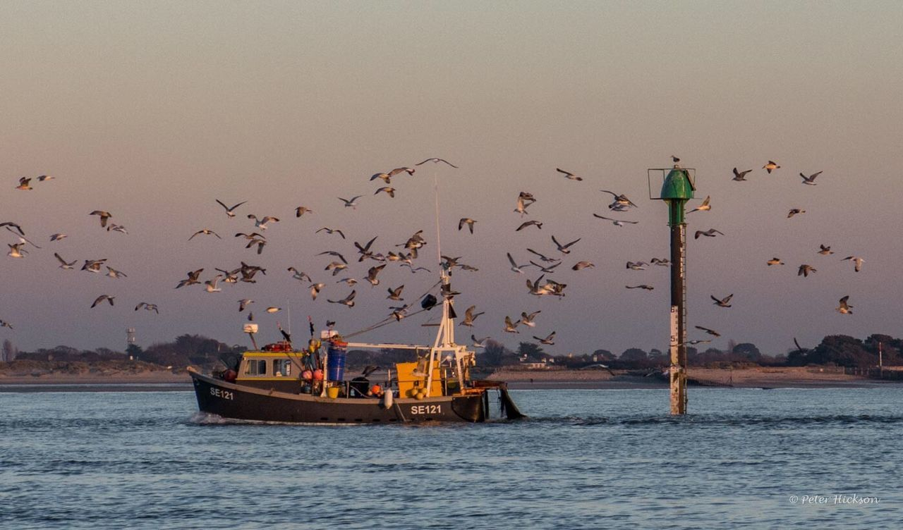Bringing supper home - Fishing Boats Fishing Boats Seagull Sea Harbour Chichester Harbour Evening Dusk