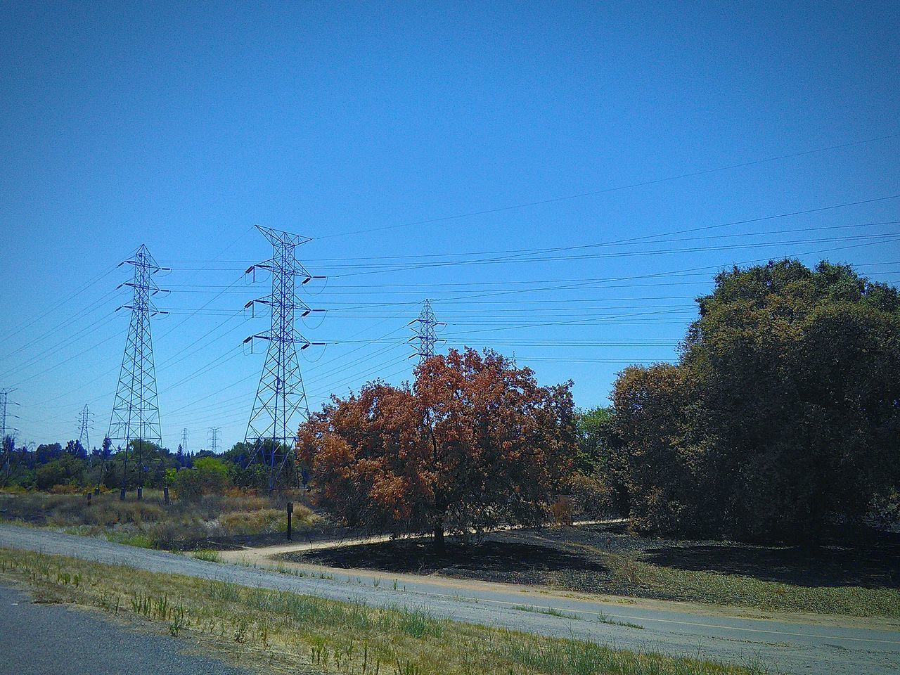 Trees And Nature Trees And Sky Power Lines Against Sky Electricity Pylon Electricity Wires And Cables Bike Path My Photography Walking Around Sacramento, California Nature Trail Trail Electricity Wires Trees And Bushes Fire Scorched Grass Showcase July