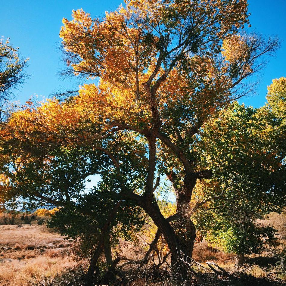 Big Morongo Canyon Preserve: Autumn Season  Colors Of Autumn Autumn Colors Outdoors Fall Colors Fall Autumn Landscape Nature Trees Walking Around Hugging A Tree
