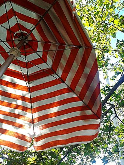 Striped sunlight.photo by Shell Sheddy Fine Art Photography Sheshephoto Shell Sheddy Photography Photo Nyc NYC Street Umbrella The Journey Is The Destination The Color Of Business