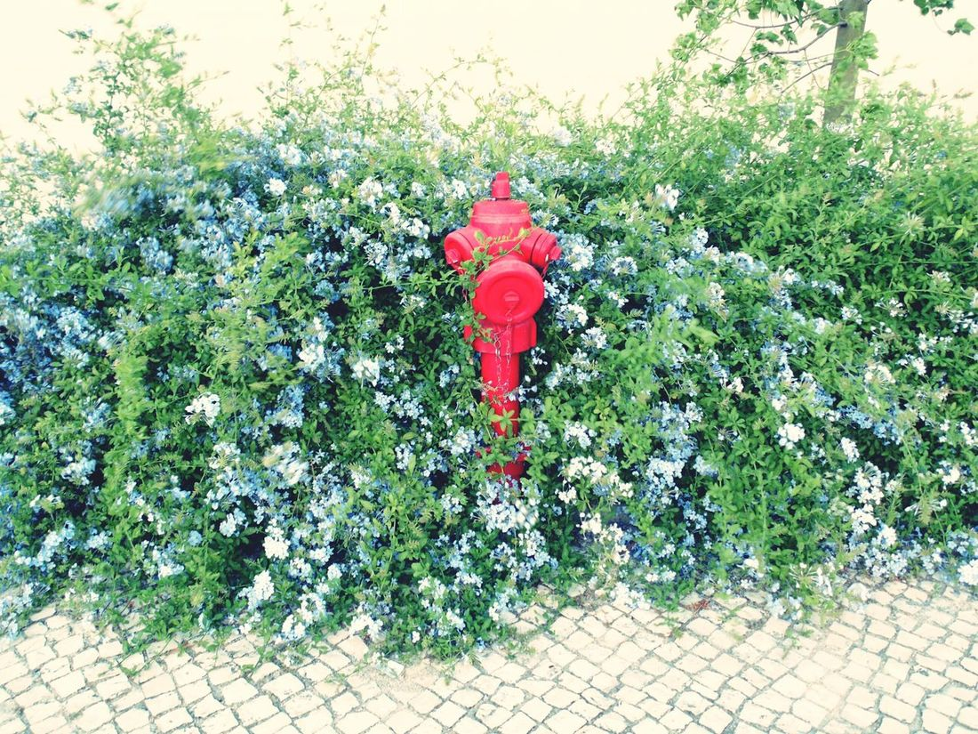 Red Growth Tree No People Horizontal Outdoors Plant Nature Day Beauty In Nature Hydrants EyeEm Best Shots EyeEm Gallery Street Photography Fire Hydrant Camouflage Camouflaged Wild Flowers Cobblestone Pathway
