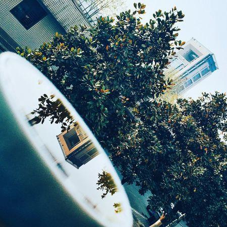 Spring Color Green Blue Building Buildings & Sky Cup Xian Xjtu 春天应该是淡绿色的,像清茶一样。