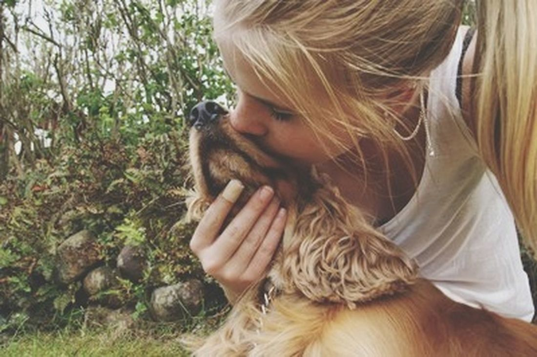 DogCute Pets Cockerspaniel ILY