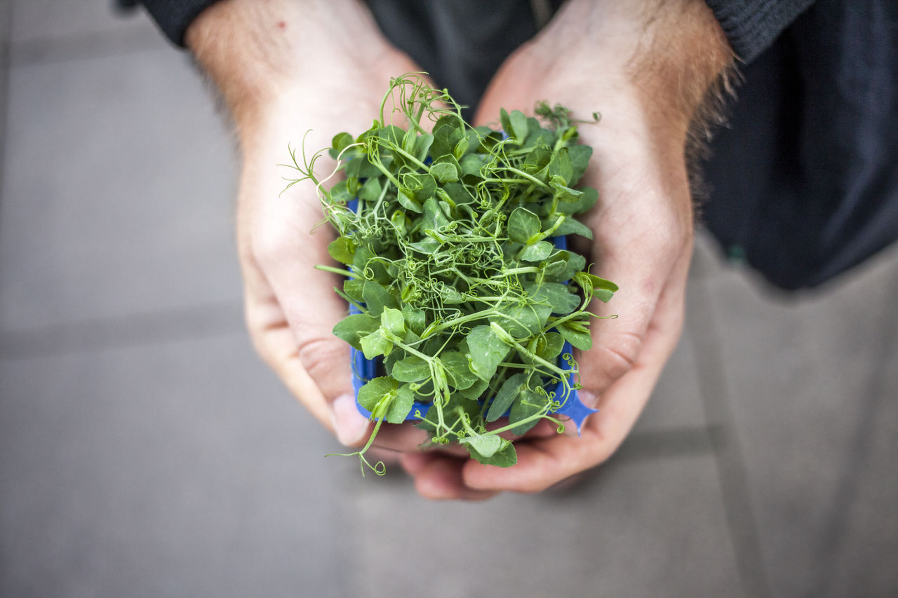 Cropped Hands Of Man Holding Herbs
