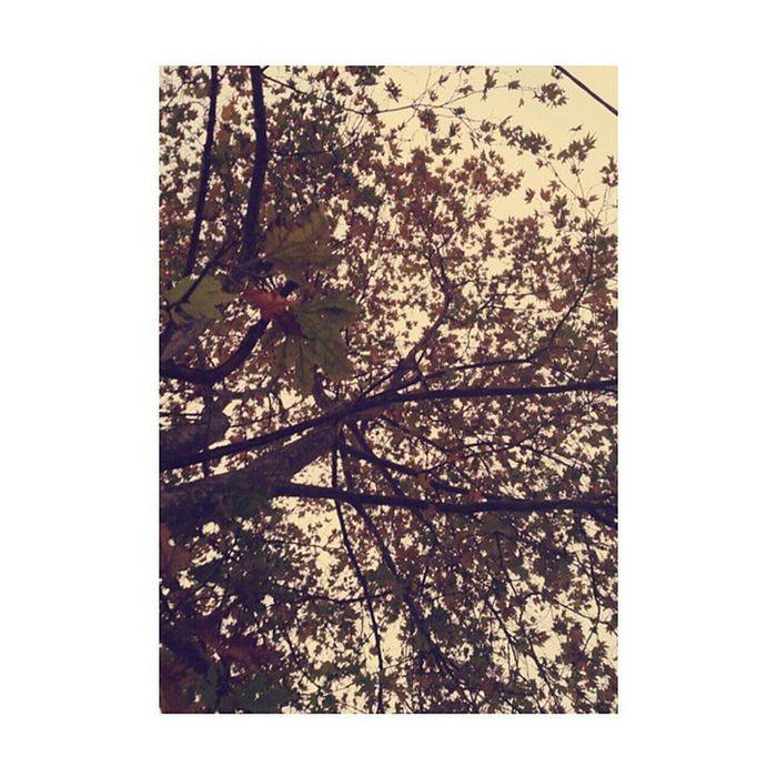 Bütün güzellikler sonbahar da ... ????☁