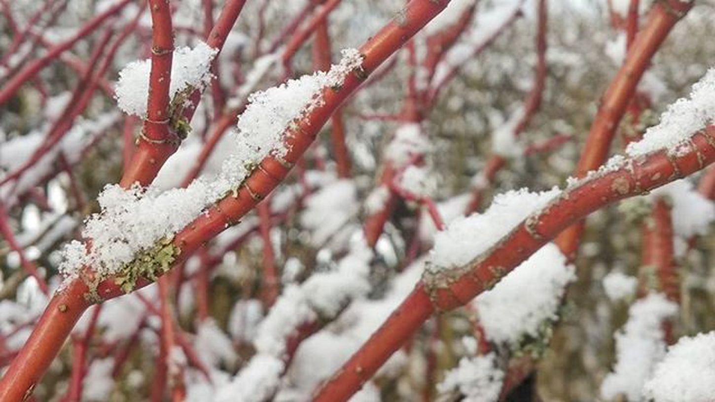 Winter❄ Winter Tree Snow Nature Photo Mobilephotography Mountains Red White Nice Beautiful Beautifull Instaphoto Instagram Photooftheday Princely_shotz Ig_shotz Ig_nature Ic_nature Ic_shotz Photographer Europe Austria Scheffau
