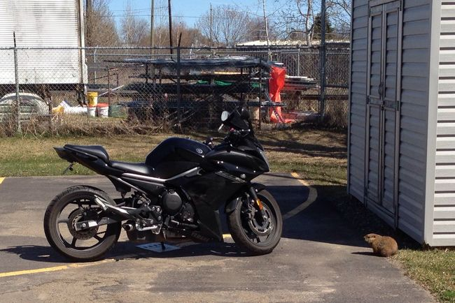 Wanna 'gopher' a ride? Get it? lol I'm sorry Motorcycle Gopher  FZ6R Lame Pun