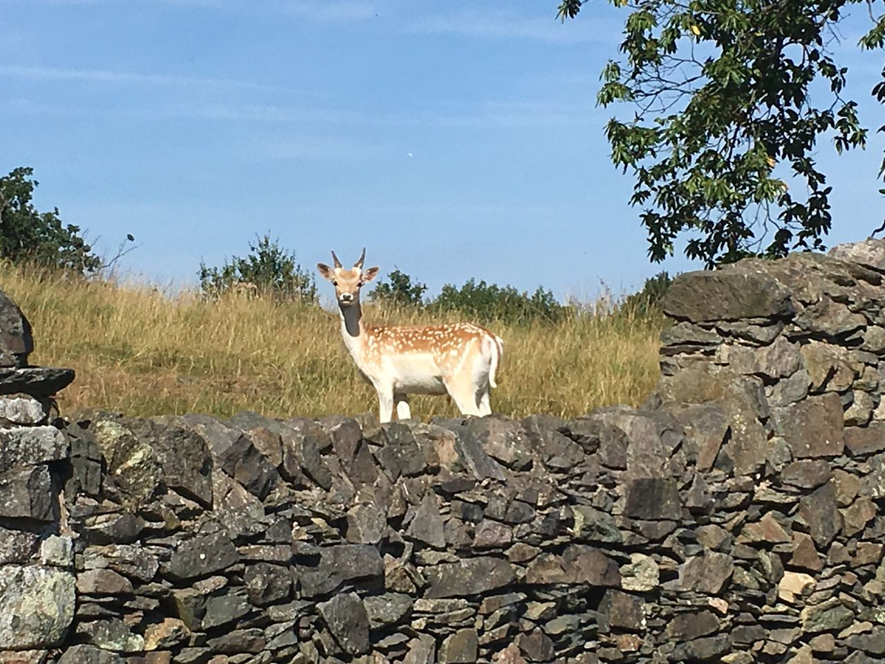 Tadaa Community Ladyphotographerofthemonth Outdoors No People Day Beauty In Nature Animal Wildlife Grass Animals In The Wild Animal Themes Sky Mammal Tree Nature Field One Animal Deer Beauty In Nature Bradgate Park Bradgatepark Bradgate