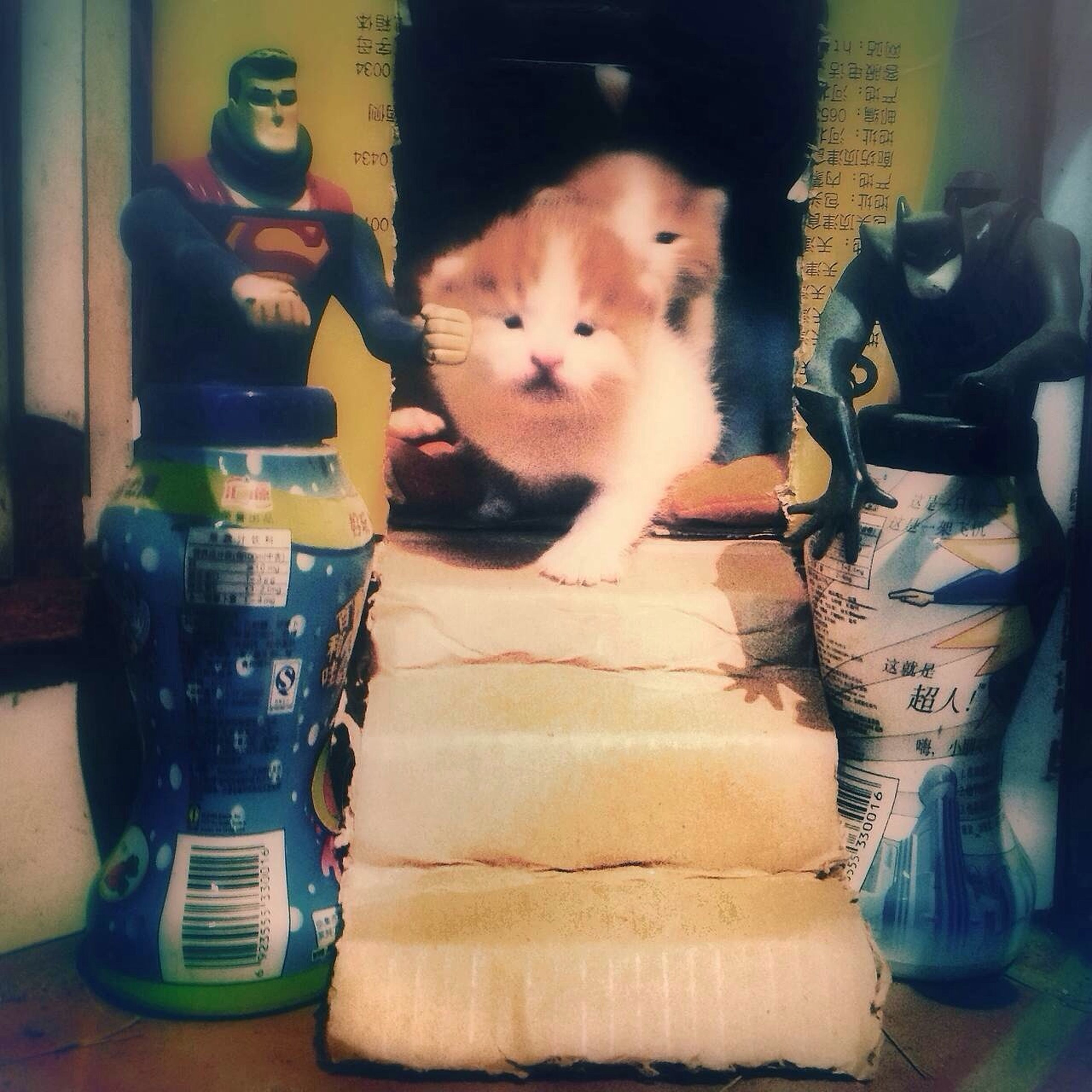 indoors, pets, domestic animals, domestic cat, cat, one animal, mammal, animal themes, sitting, home interior, looking at camera, portrait, feline, relaxation, sofa, front view, home, full length, chair, bed