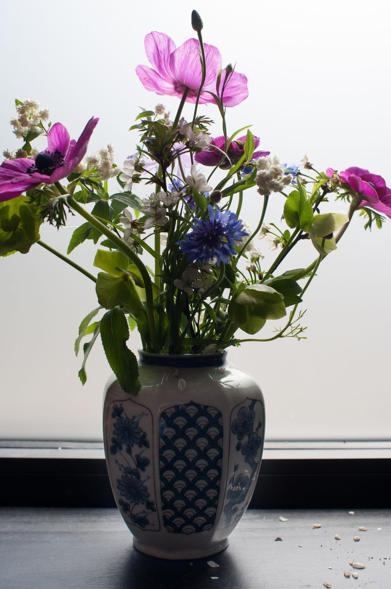Beautiful stock photos of badezimmer, Day, Flower, Flower Head, Fragility