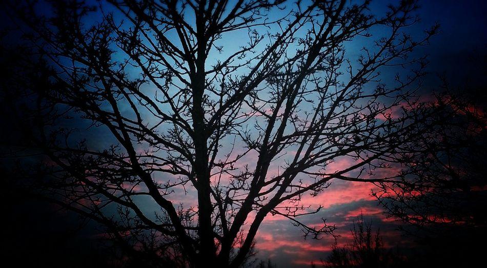 Sundown Sun-collection Sun Light Lonely Tree