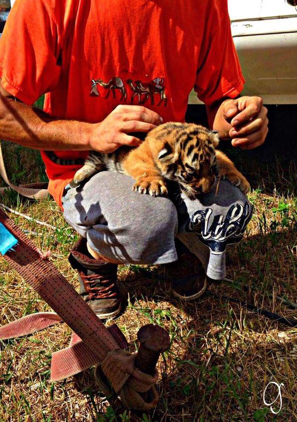 Vet Student Veterinary Veterinarian Vetlife Puppies Tiger Tiger-love