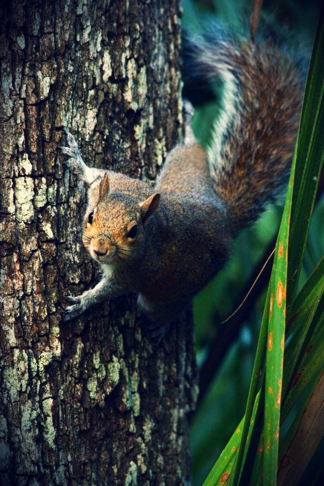 Squirrel Animal Nature