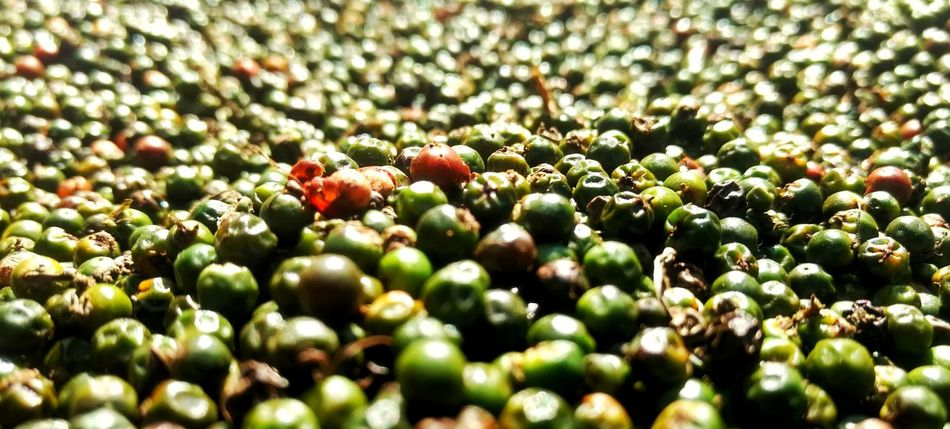 Pepper! Growth Full Frame Beauty In Nature Healthy Eating Nature Food Green Color Outdoors Day Freshness Close-up Macro Photography Pepper Farmtotable Plucked Dry Red And Green Tree Fruit No People Backgrounds