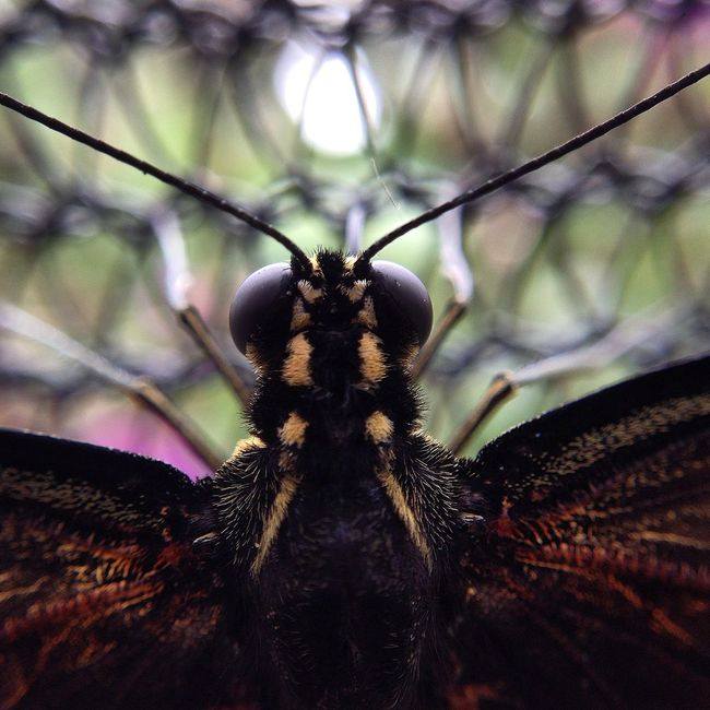 Butterfly Close Up Butterfly Heard Natural Science Museum IPhone5 Olloclip_macro Close Up Macro Beauty