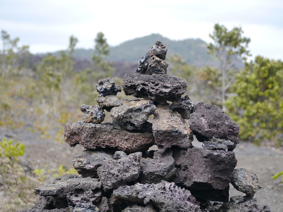 Beauty In Nature Close-up Day Focus On Foreground Growing Hawaii Hawaii Volcano Trail Hawaii Volcanoes National Park Nature No People Outdoors Selective Focus Stone Tranquility Volcano Rock Volcano Stone