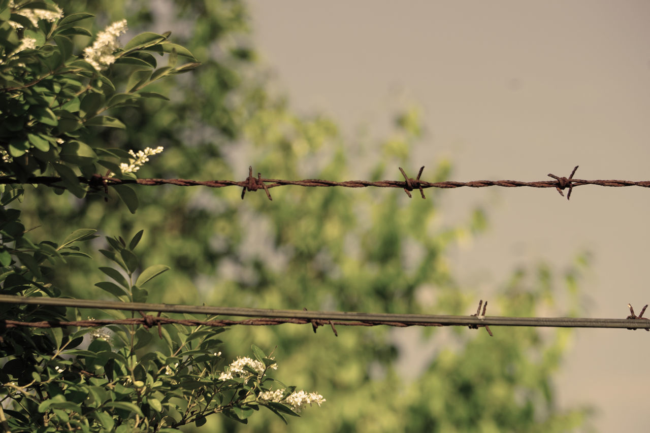 safety, protection, security, metal, no people, barbed wire, nature, outdoors, focus on foreground, day