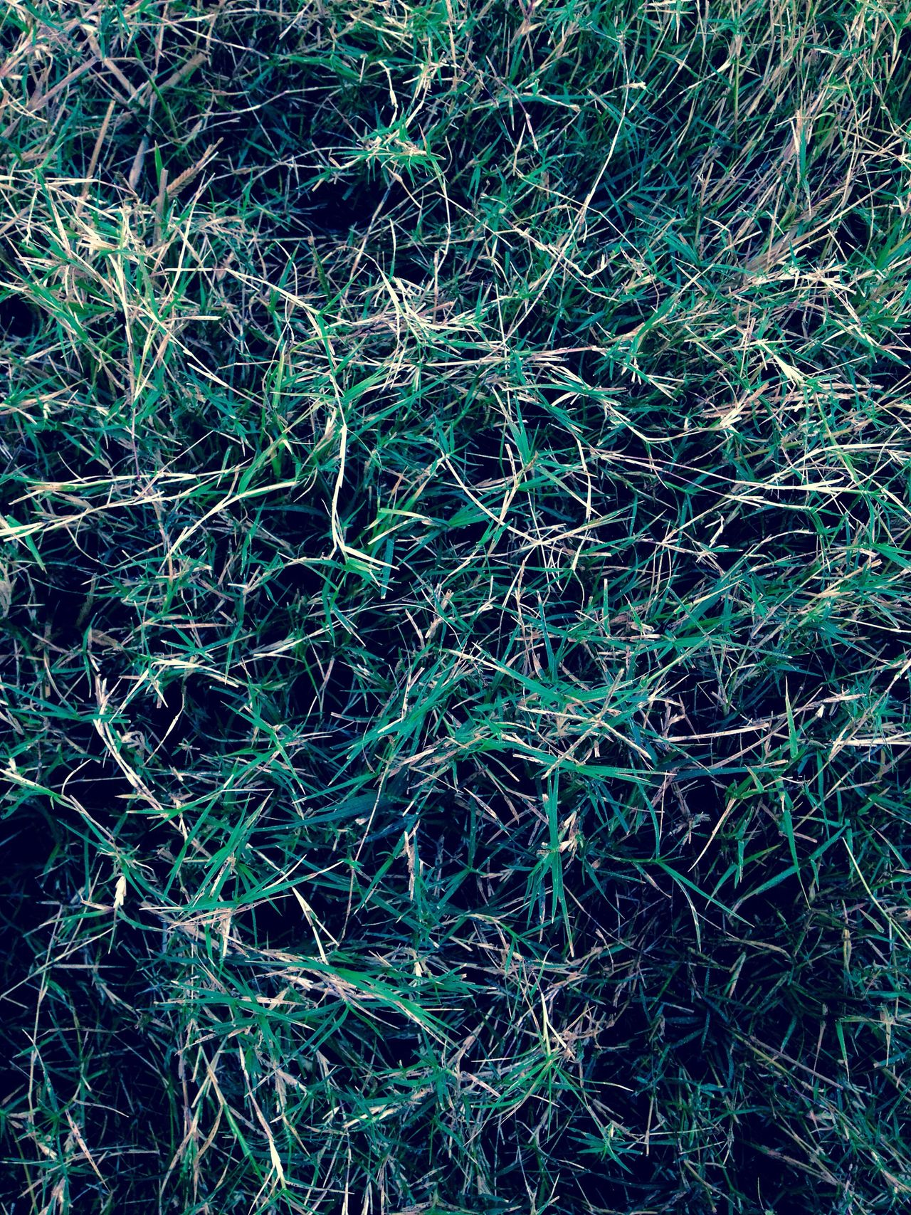 Green Color Green Greenery Grass IPhoneography Iphoneonly IPhone Iphonephotography Iphonesia IPhone 4S IPhone Photography IPhone4s Mobilephotography Mobile Photography Bangalore India