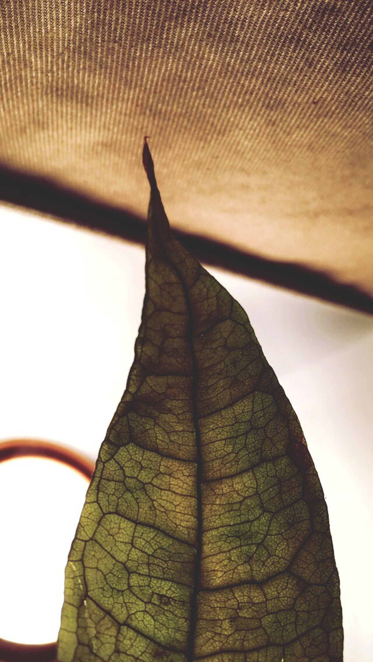First Eyeem Photo Leaf Vein Leaf Indoors  Indoor Indoor Photography Inside Inside Things