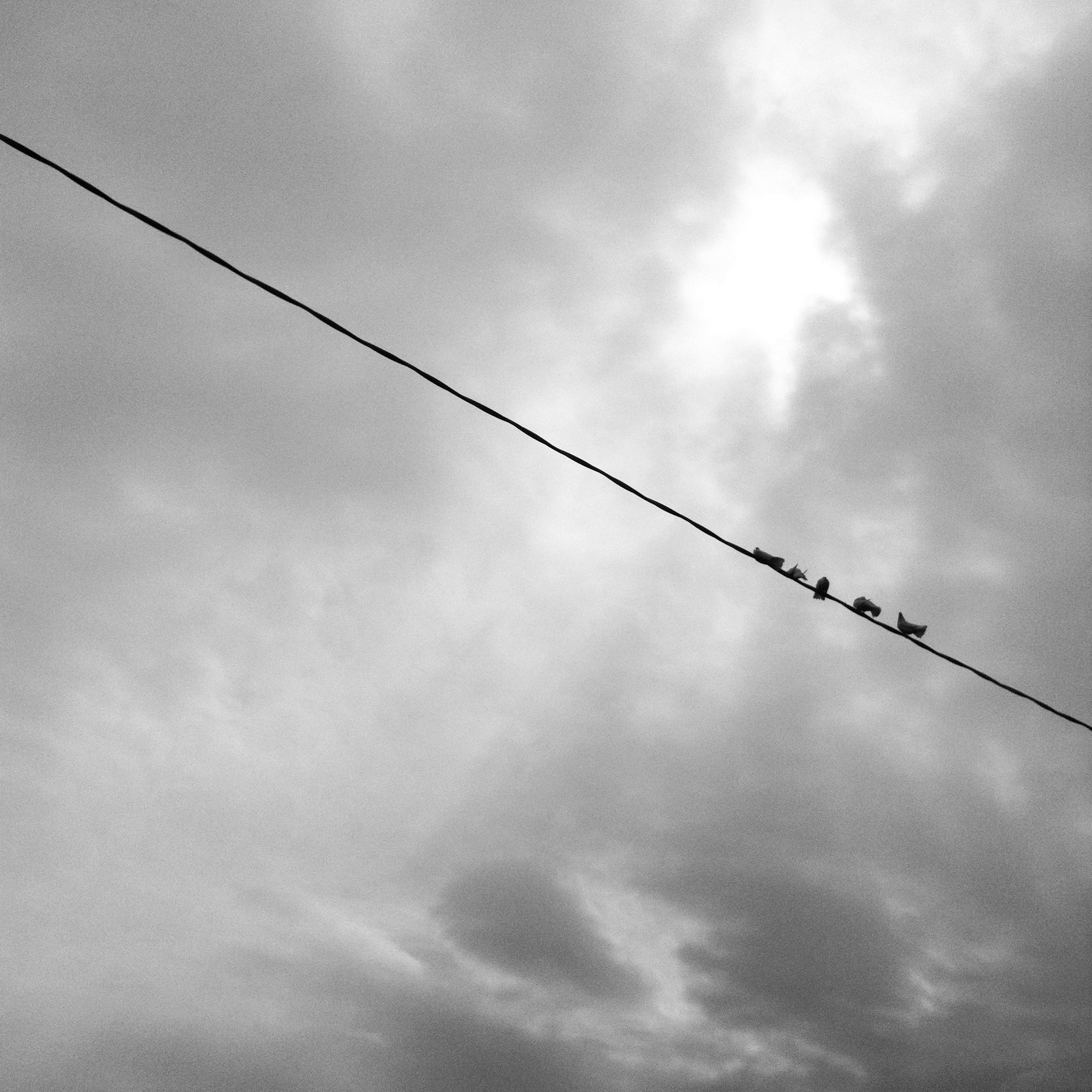 low angle view, sky, power line, cable, cloud - sky, cloudy, electricity, cloud, connection, bird, power supply, electricity pylon, nature, no people, silhouette, outdoors, day, hanging, power cable, animal themes