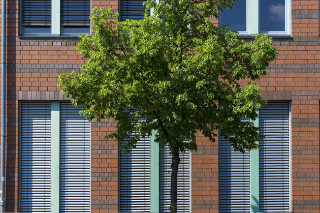 Young tree against brick wall of modern office building Apartment Architecture Backgrounds Brick Wall Building Building Exterior Built Structure City Close-up Day Full Frame Green Green Color Growing Growth Modern Nature No People Office Building Outdoors Plant Small Tree Tree