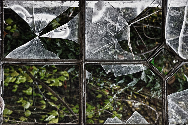 Beauty In Nature Close-up Crashed Day Fragility Glass Growth Leaf Nature Outdoors Plant Tree Window