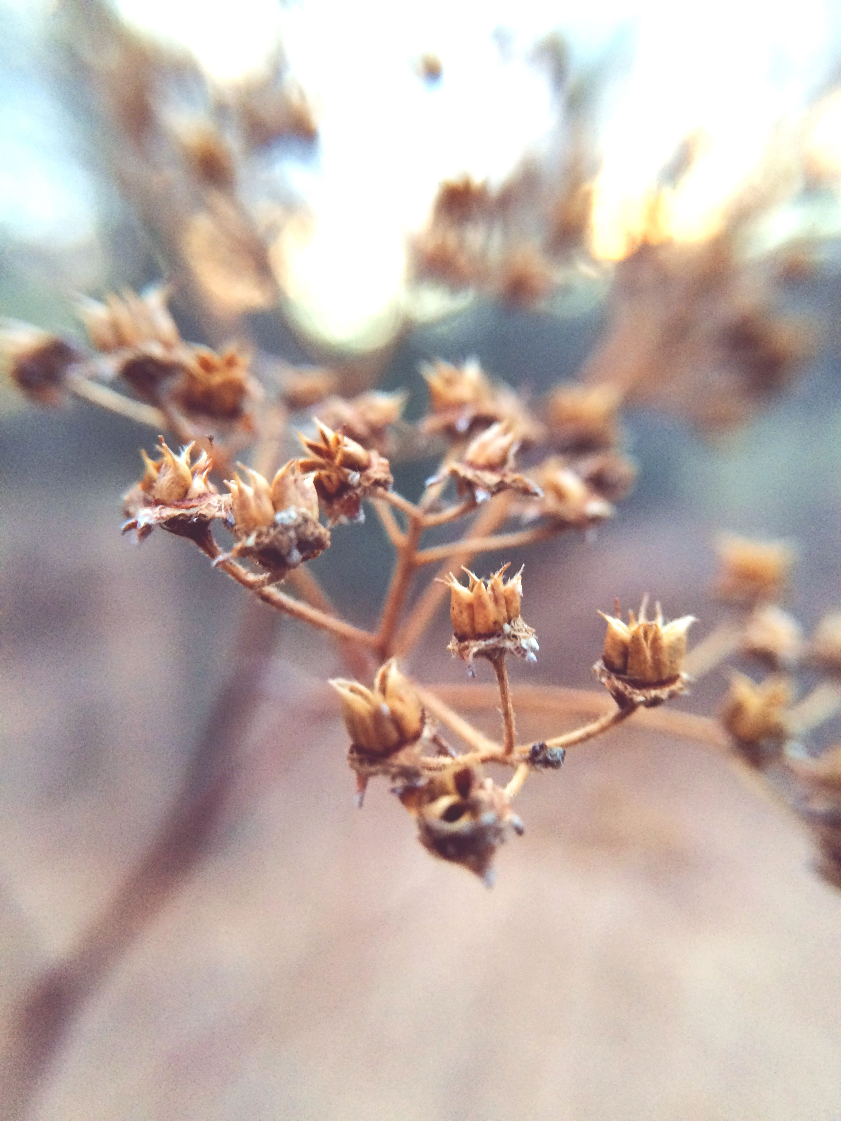 focus on foreground, growth, flower, close-up, nature, fragility, selective focus, plant, freshness, beauty in nature, branch, dry, stem, bud, outdoors, tranquility, twig, sunlight, day, tree