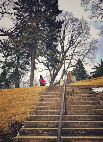 One Person Steps And Staircases Steps Trees Cemetery Walking Alone... Walking Away Child Red Jacket Rear View Outdoors Pine Trees Snow Dead Grass Autumn Railing