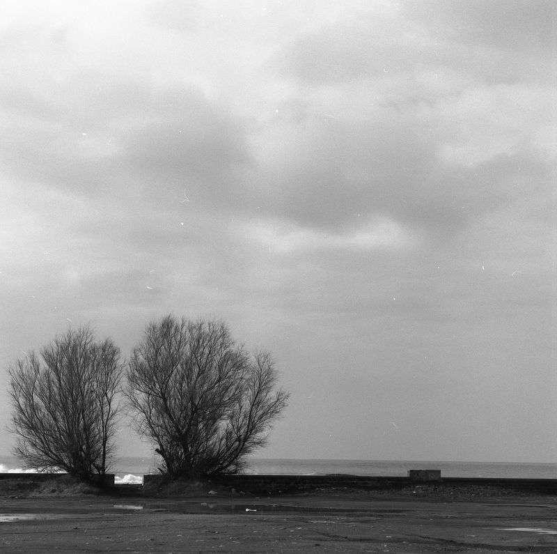Winter. Analogue Photography The Great Outdoors - 2017 EyeEm Awards Black And White Collection  Black And White Collection  Blackandwhite Filmisbetter Black And White Collection  Streetphotography_bw Travelling Photography EyeEm Best Shots Train Station EyeEm Best Shots - Black + White EyeEm Selects BW Collection Eye Em Nature Lover Hasselblad Film Sea And Sky Sea View Seaview Beach BW_photography Dryplant Melancholic Landscapes Melancholia Where To Go? Breathing Space Lost In The Landscape EyeEmNewHere Black And White Friday