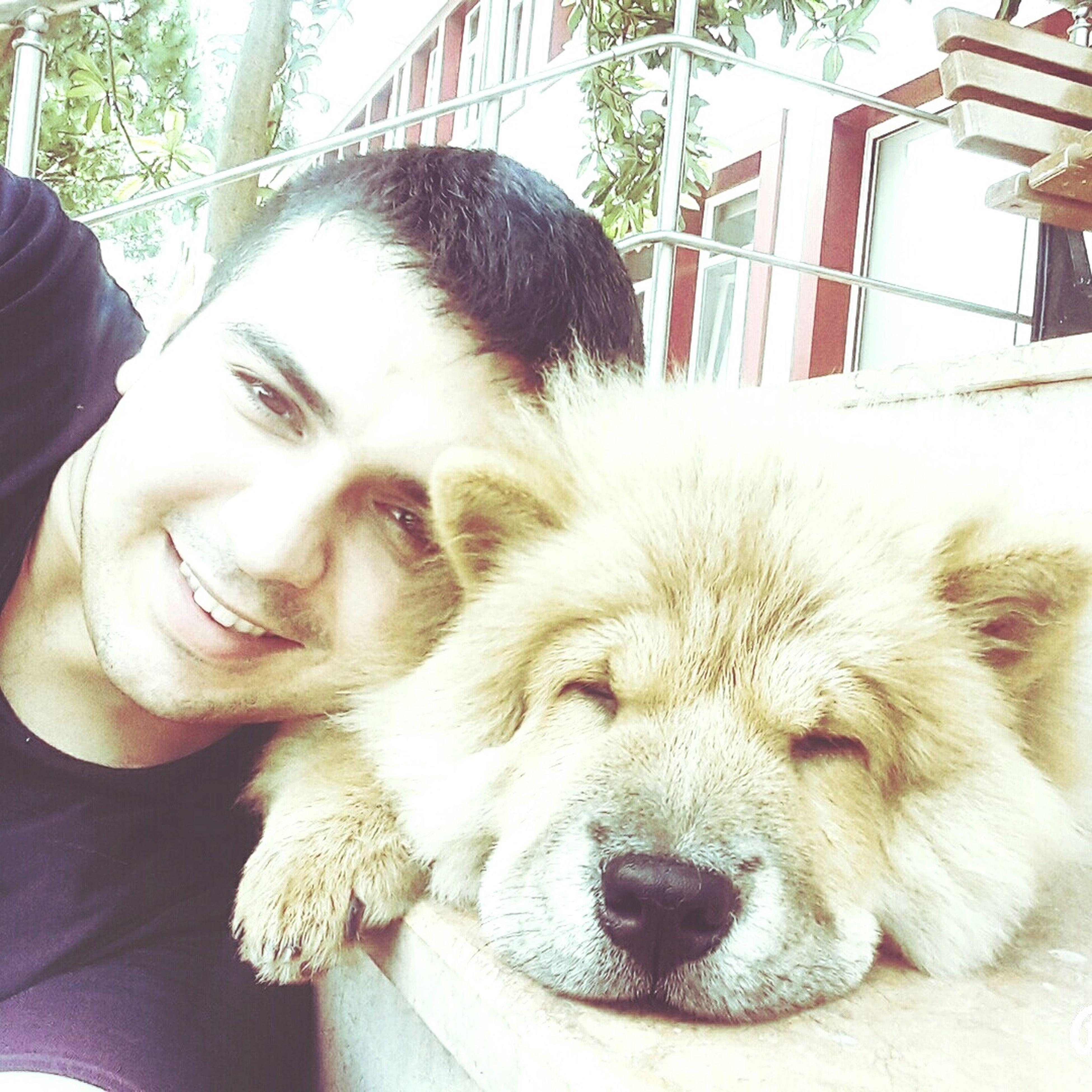 ChowChow Chow Chow Mydog♡