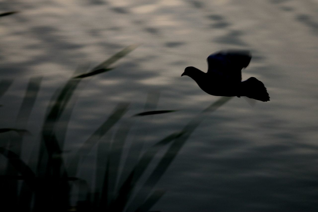 Pegion Justtakingpictures Just Chillin' Blur Motion Bird Watching Walking Around Just Clicking Enjoying Nature