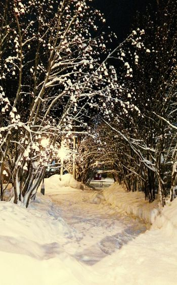 That Night I saw Rowan Trees all covered with Snow ❄ in Murmansk Cold Winter ❄⛄ Night View Small City Life