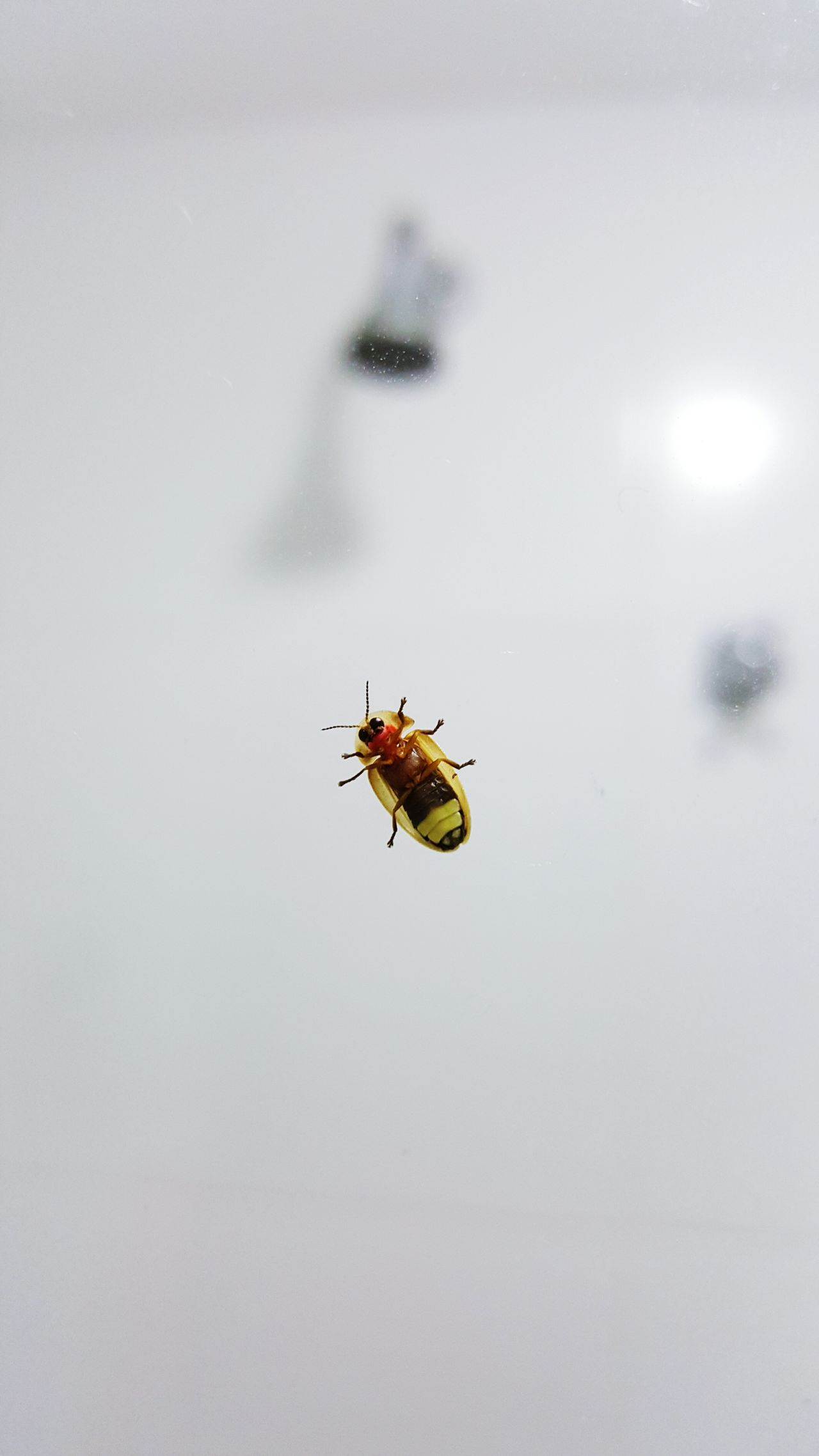 A little visitor just came in my bathroom. Fireflies Bugs Insects
