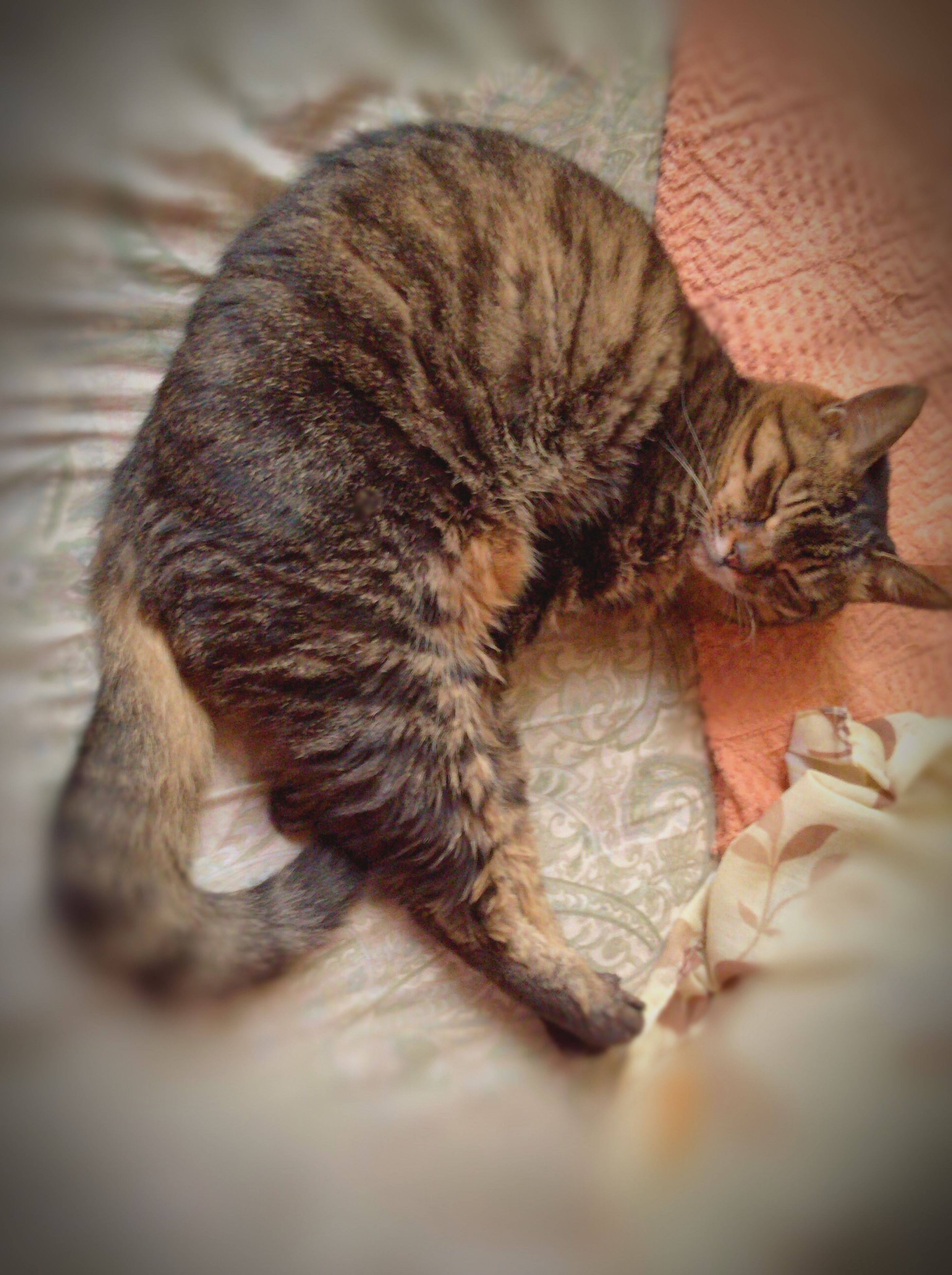animal themes, pets, domestic animals, one animal, domestic cat, indoors, mammal, cat, feline, relaxation, sleeping, resting, lying down, whisker, bed, high angle view, eyes closed, close-up, home interior, selective focus