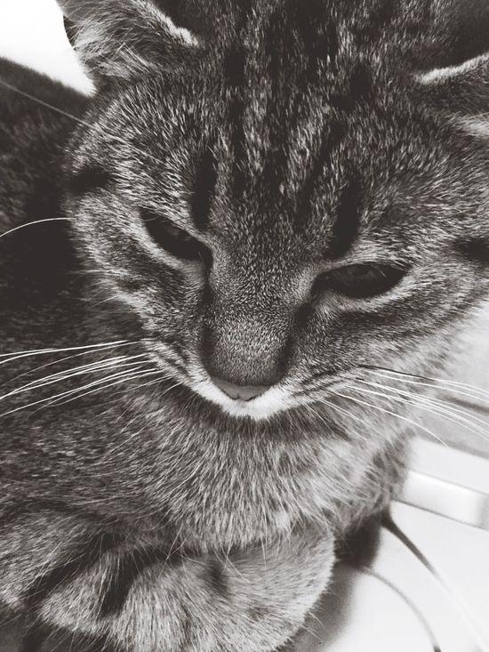 miao. Cute Cat Love 🐱