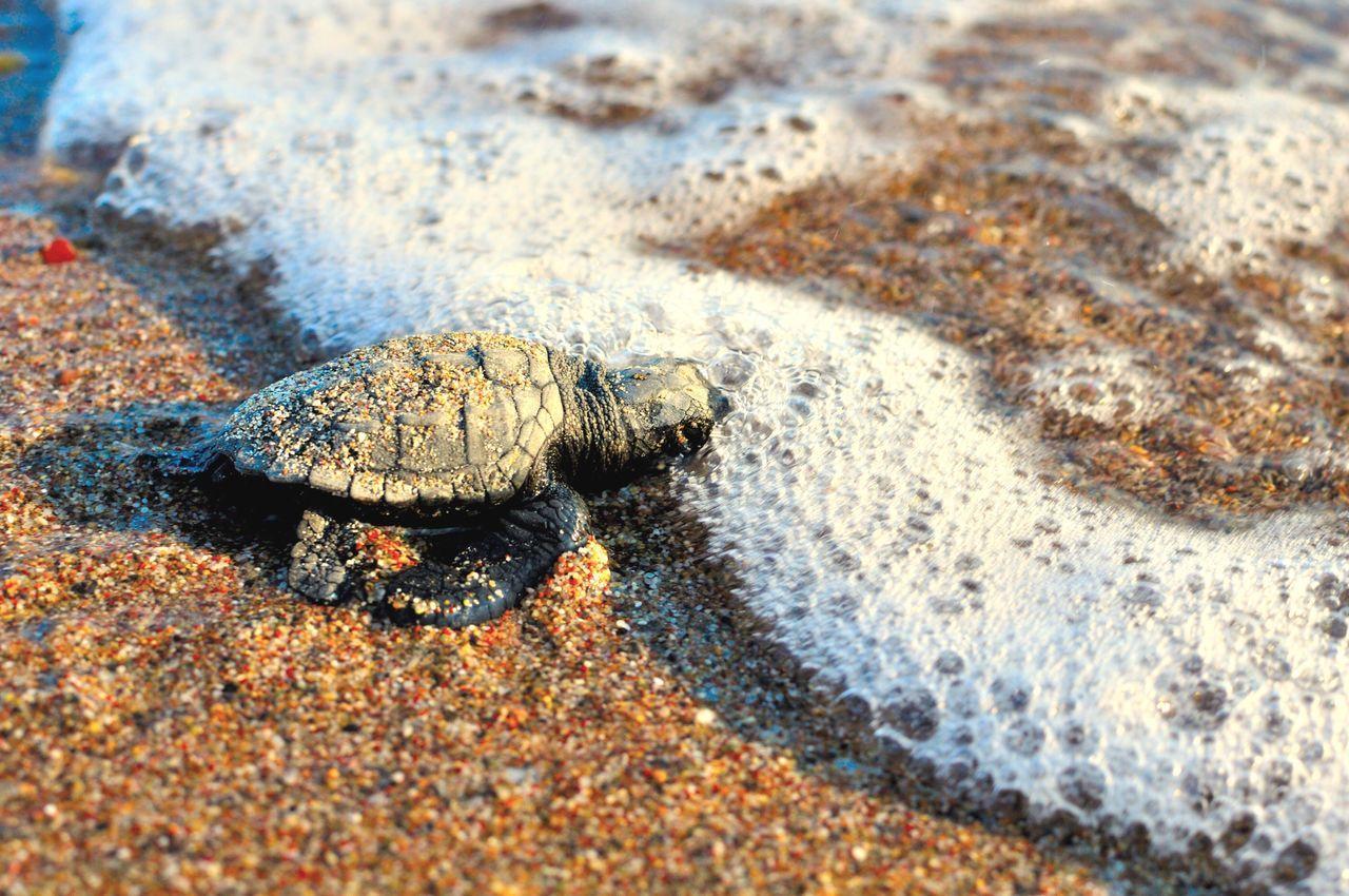 Sea Turtle On Sand